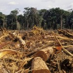 Le foreste sono diminuite dell'80%
