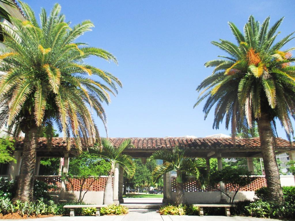 Palmiers cachés derrière le City Hall de Coral Gables