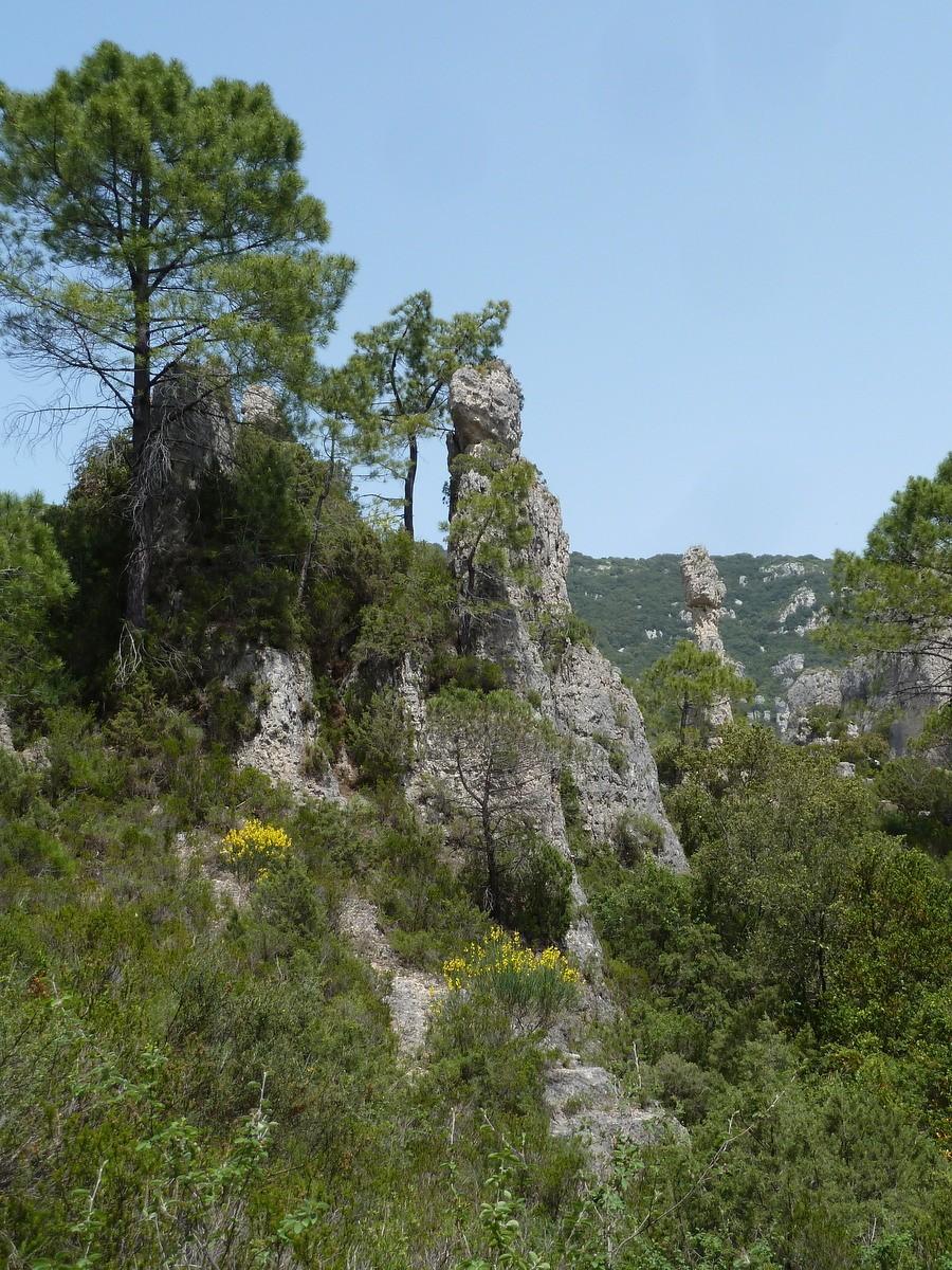 arbres et roches cirque de mourèze