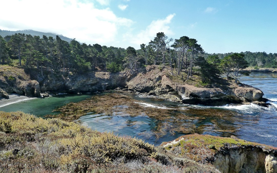 Californie : la réserve de Point Lobos, paradis sauvage sur la Highway 1