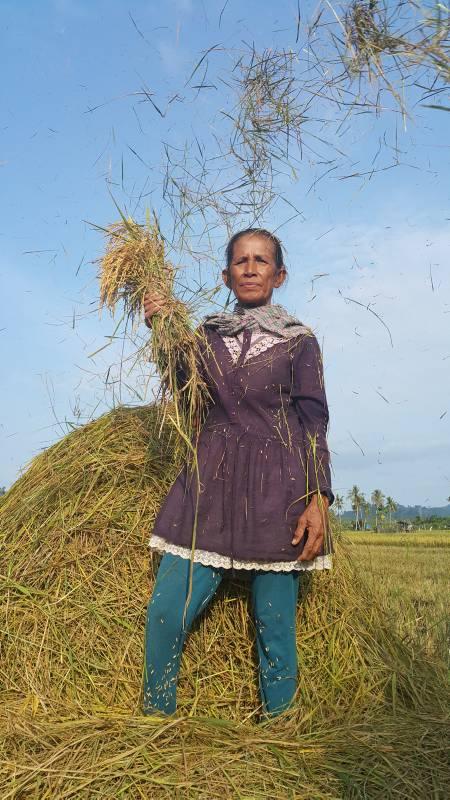 Seorang buruh tani berpose saat menggiling padi di kawasan Poriaha, Kabupaten Tapanuli Tengah