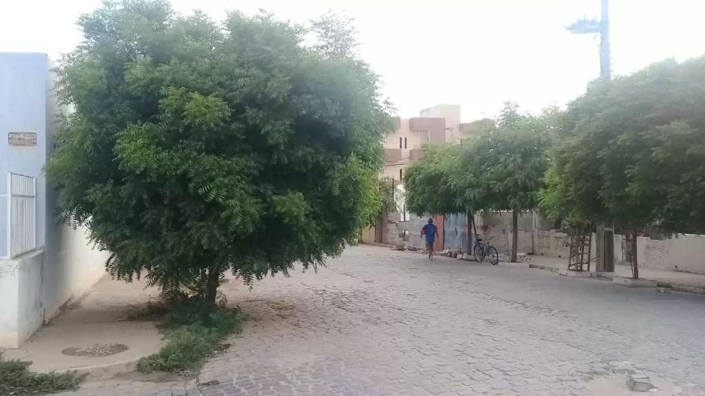 Cansado de esperar por ação da prefeitura morador resolve podar árvore que estava colocando em risco trânsito na cidade