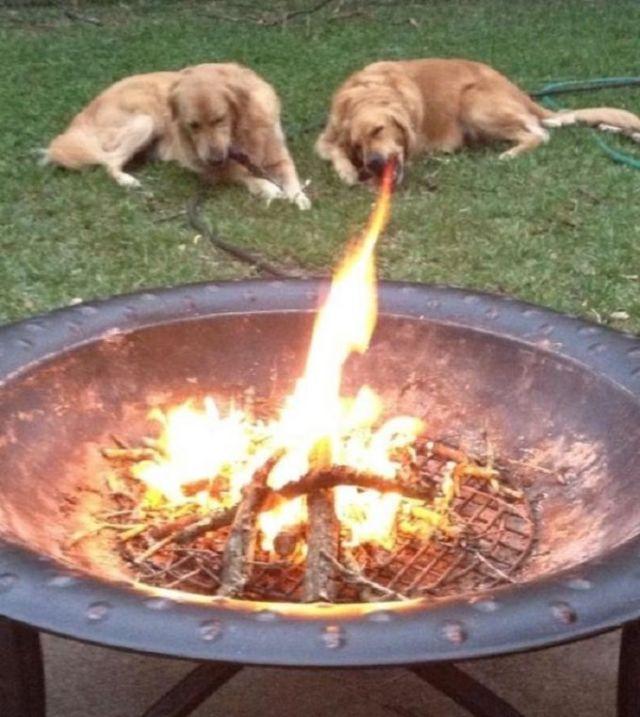 Anjing Menggeluarkan Api