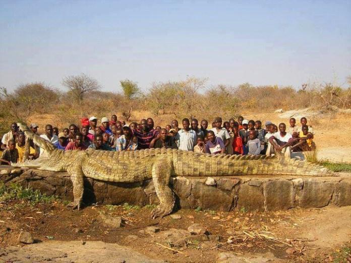 Buaya Sungai Benin