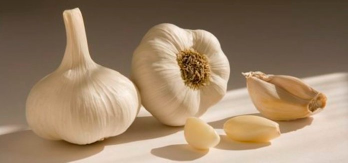 bawang putih untuk radang tenggorokan