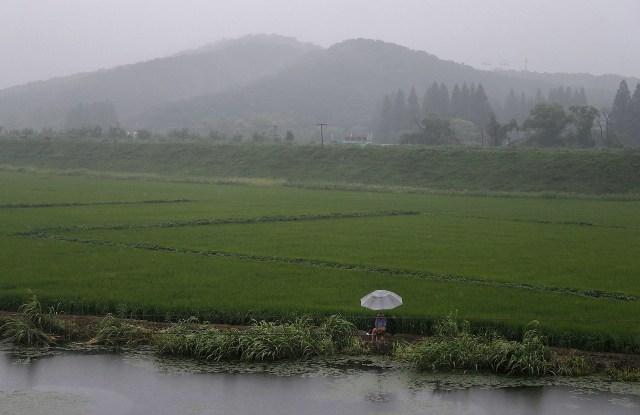 Hujan membantu pertanian