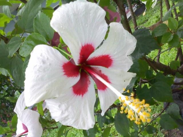 gambar via: Manfaat di dalam keindahan bunga