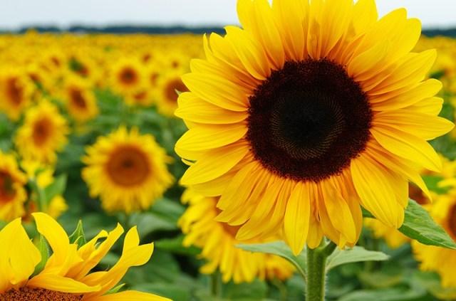 35 Gambar Bunga Anggrek Dari Sedotan Plastik