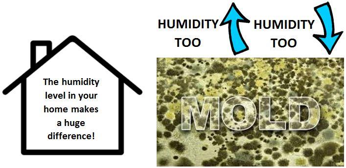home-humidity-mold