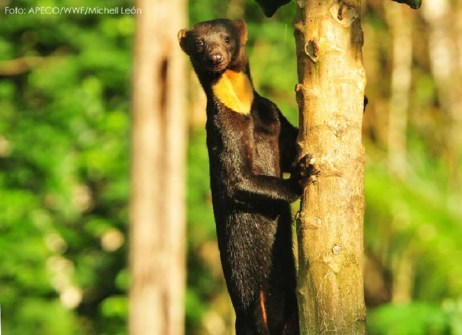 El Parque Nacional Alto Purús tiene el récord mundial de diversidad de mamíferos con 86 especies registradas. Foto: Sernanp
