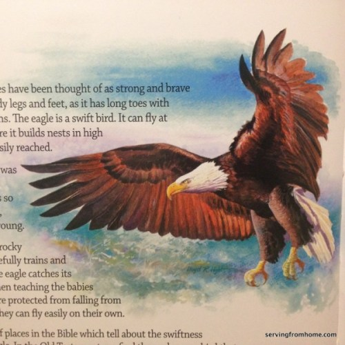 Animals of the Bible - eagle