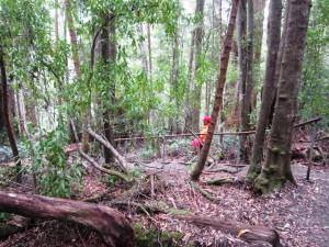 hutan di tahune tasmania