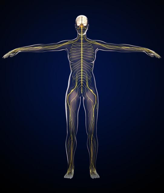 人工股関節置換術と神経麻痺2