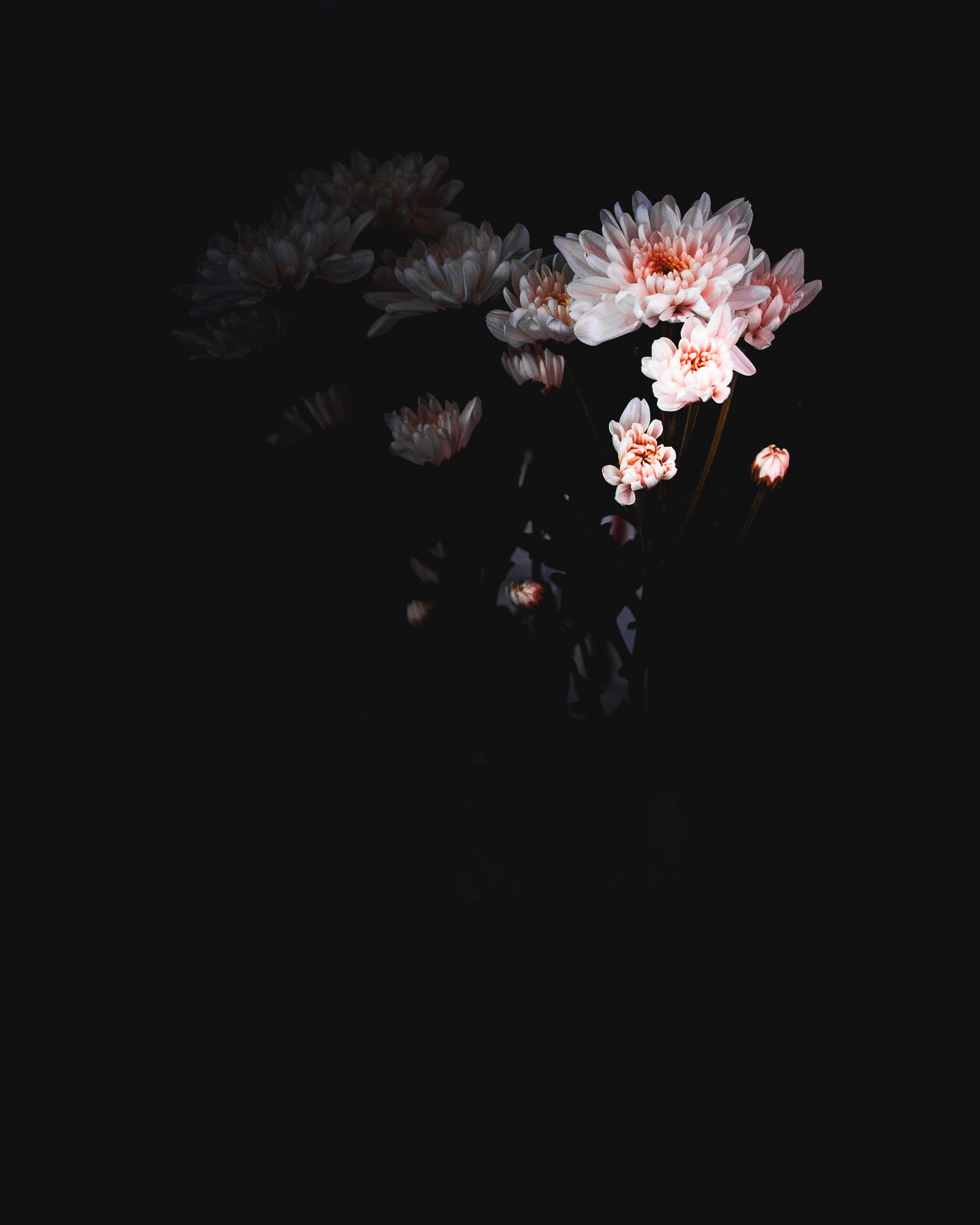 Lotus Flower Screensaver