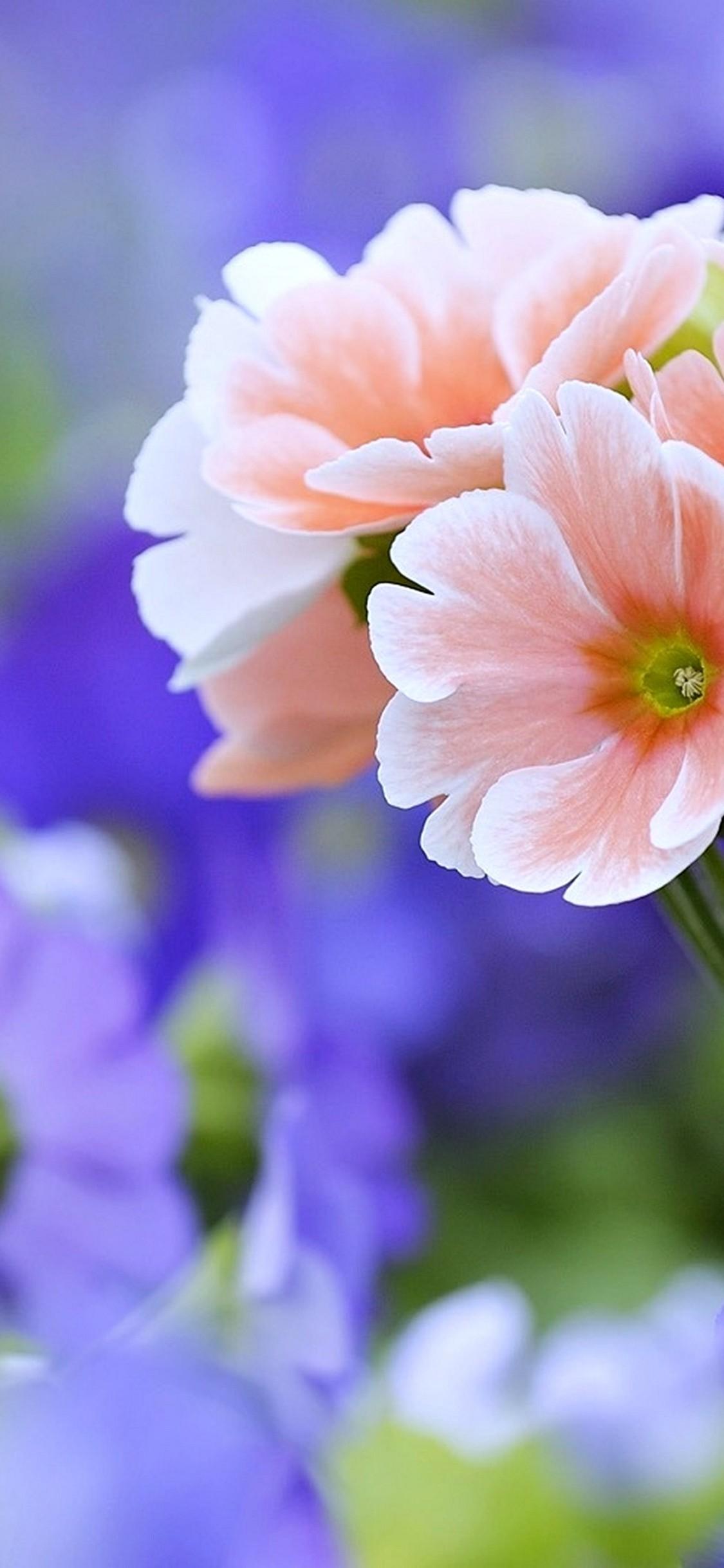 Beautiful Flowers Wallpaper 1125x2436