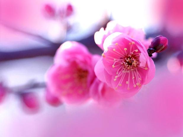 Wallpaper flower beautiful pink wallsmiga hot pink flower wallpaper 15 1024x768 mightylinksfo