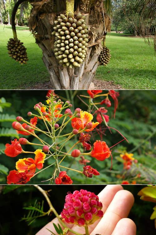 blog voyage whv australie darwin backpacker expat botanic fleur flower