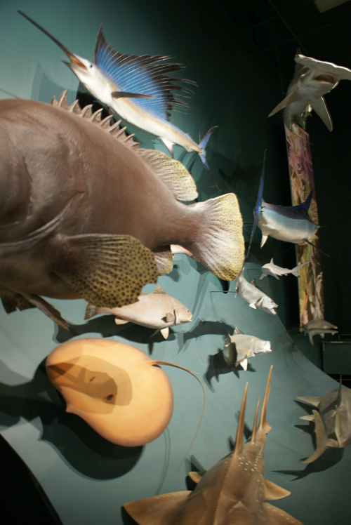 blog voyage whv australie darwin backpacker expat poisson musee museum fish