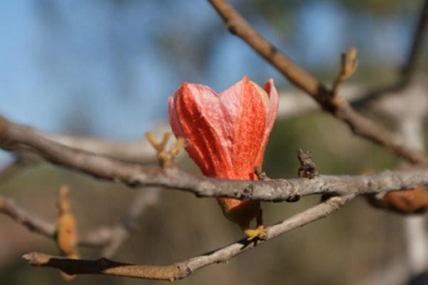 blog voyage australie australia whv backpacker fleur nature macro flower