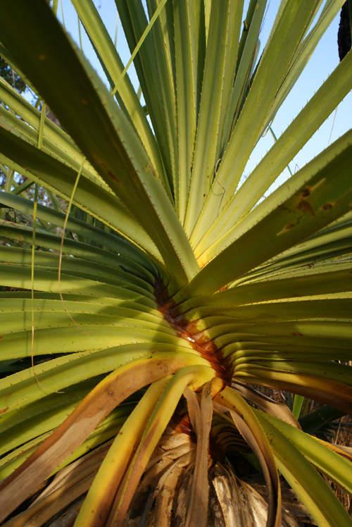 blog voyage australie australia whv backpacker vegetation insolite plante