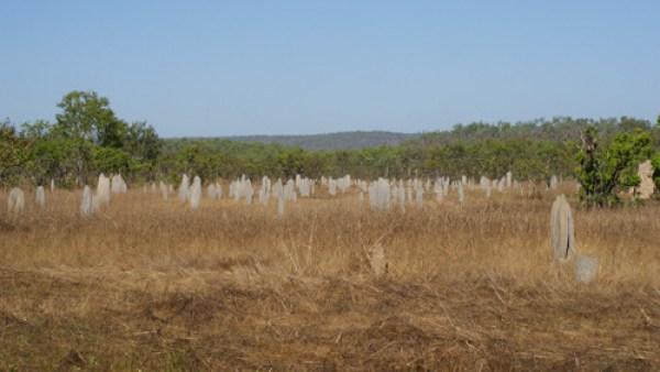 blog voyage australie australia whv backpacker kakadu park termitary termite termitiere