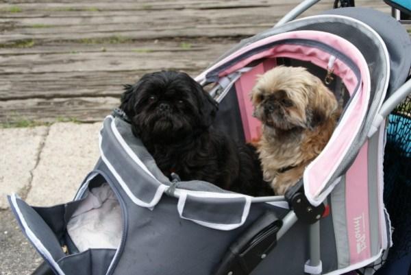 blog voyage australie dog chien poussette bébé