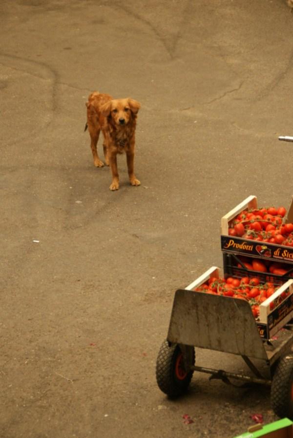 blog voyage australie whv roadtrip italie dog chien cute mignon