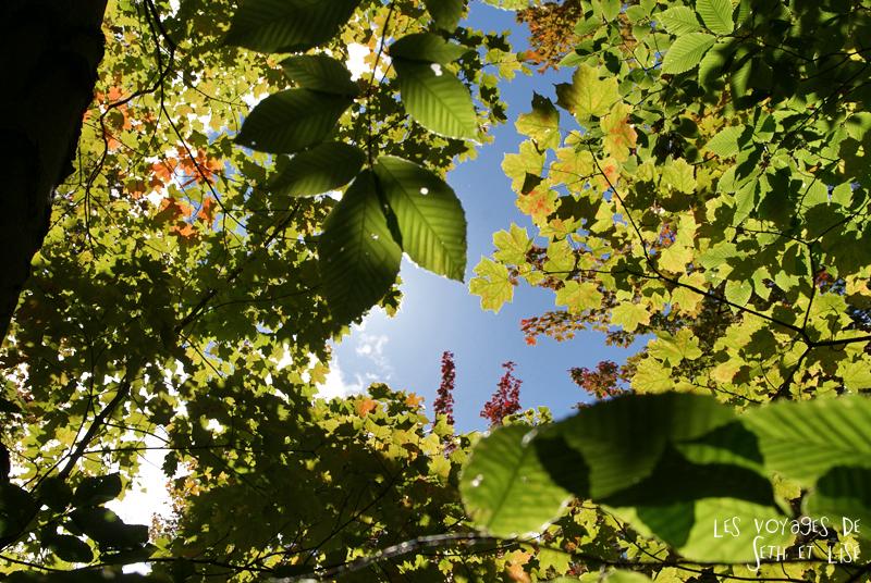 blog pvt canada pvtiste quebec mont orford parc photgraphie voyage couple ete indien summer indian couleur colors nature tour du monde paysage arbre