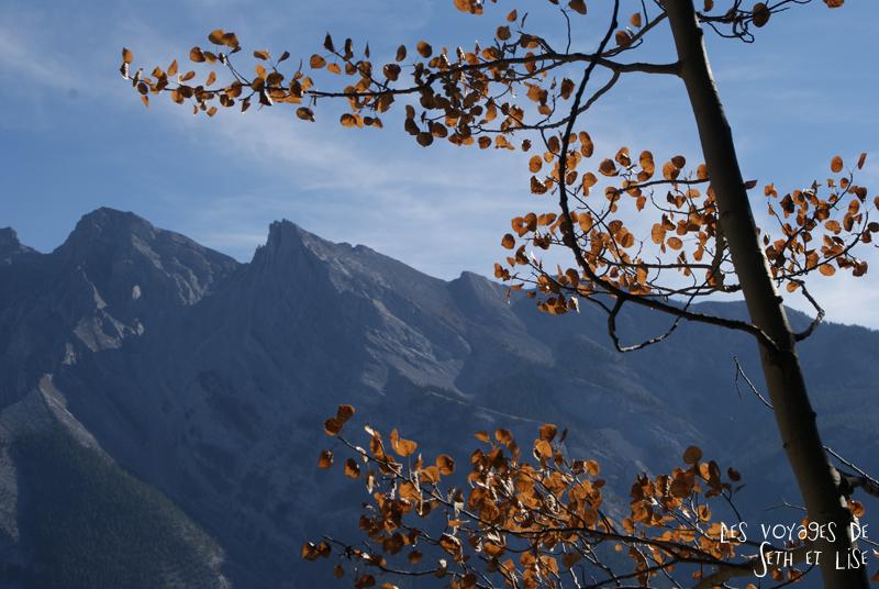 blog photogaphie pvt pvtiste canada alberta rocheuses montagne couple voyage tour du monde paysage nature lac lake minnewanka leaf feuille