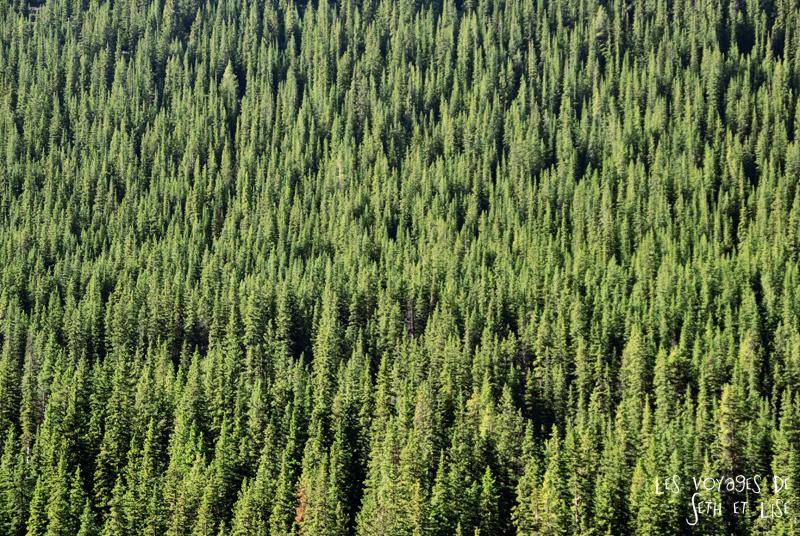blog photogaphie pvt pvtiste canada alberta rocheuses montagne couple voyage tour du monde paysage nature lac lake forest foret