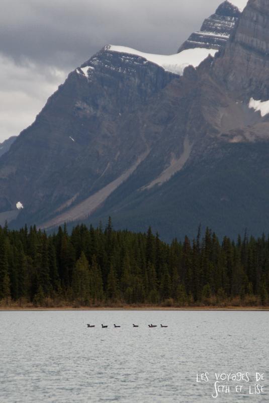 blog pvt photographie pvtiste canada alberta rocheuses rockies moutains voyage montagne couple tour du monde nature parc national lac lake ducks