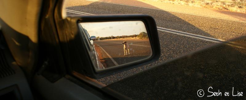 blog voyage conseil road trip aventure roadtrip voiture van dingo uluru wild sauvage
