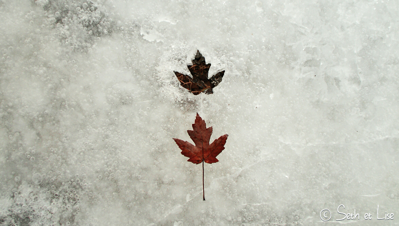 blog pvt canada montreal hiver glace printemps blanc photographie seth lise feuille erable rouge