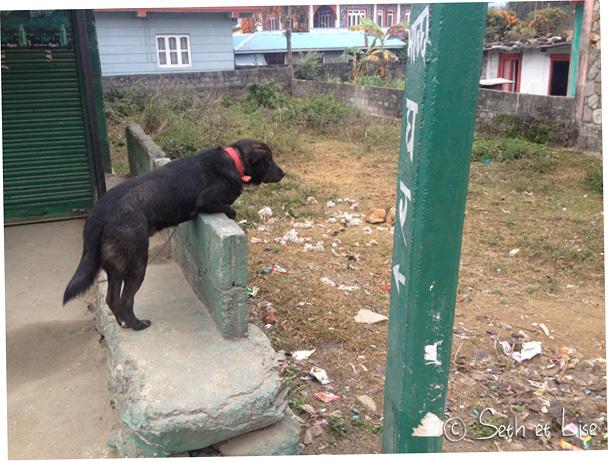 La commère du quartier est un chien...