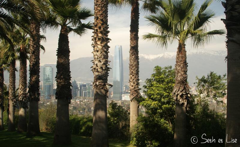 des palmiers devant les bulidings