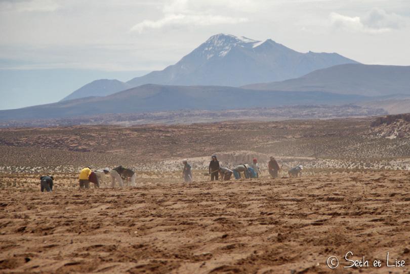 quinoa worker bolivia