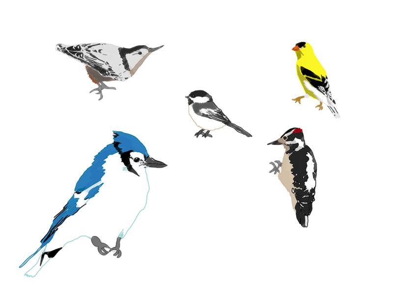 oiseaux_quebec