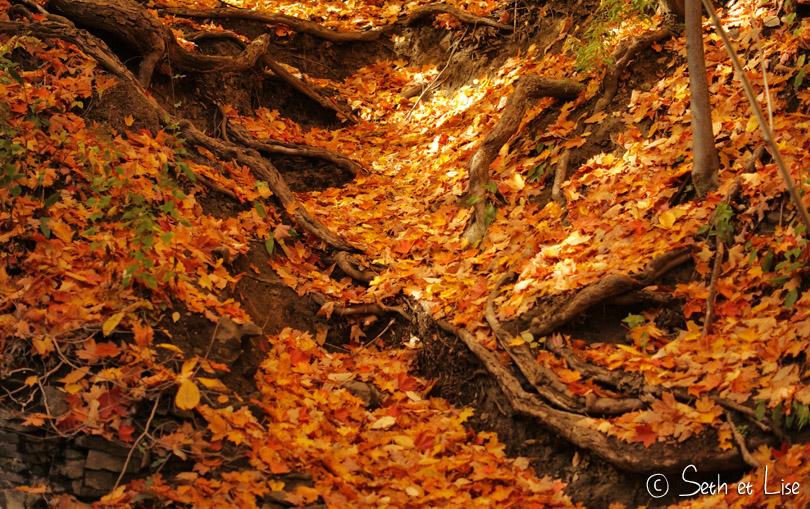 feuilles autiomne jaune