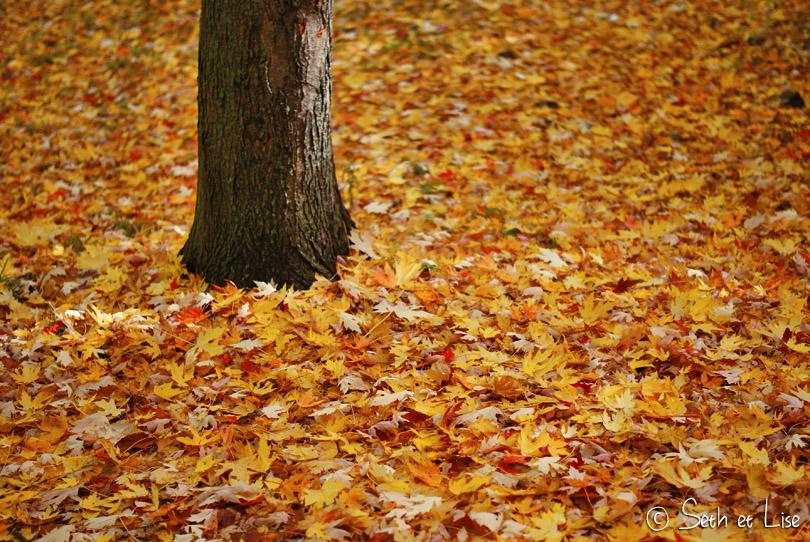 feuilles sol automne