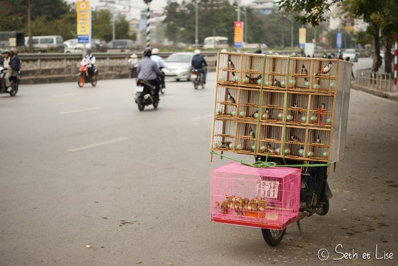 bird_scooter_vietnam
