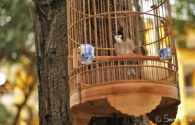 Le triste sort des oiseaux du Vietnam