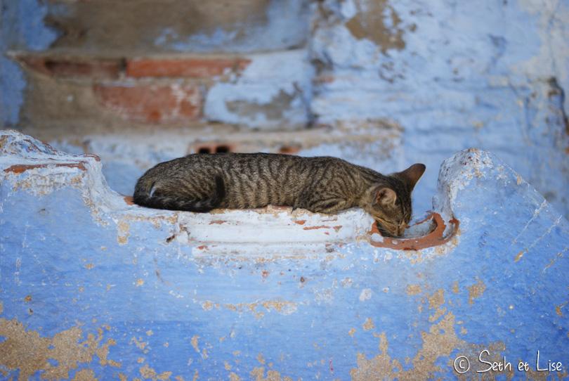 chefchaouen cat