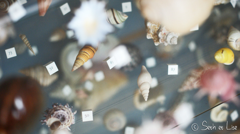 coquillage redpath museum