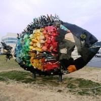 Chinu - the Black Sea Bream of Uno