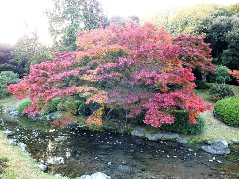 Ritsurin Garden - Late November - 03