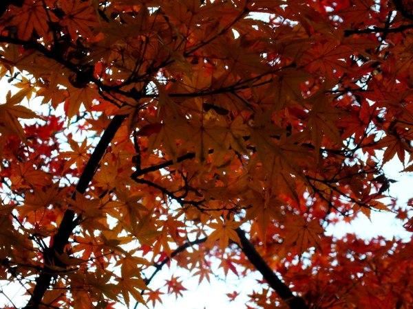 Ritsurin Garden - Late November - 19