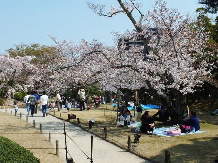 Cherry Blossoms in Ritsurin Garden - 2015 - 2