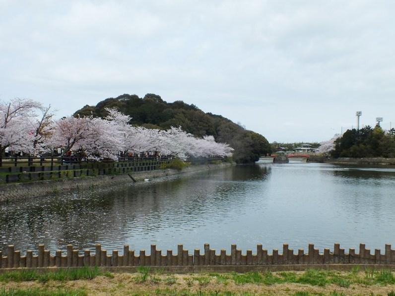 Cherry Blossoms at Kikaku Park 2017 - 28
