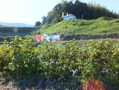 Harvest Festival and Seppuku Pistols on Teshima - 4