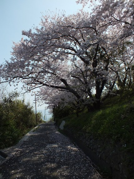Ogijima - April 2018 - 9